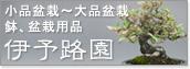 小品盆栽〜大品盆栽、鉢、盆栽用品【伊予路園】